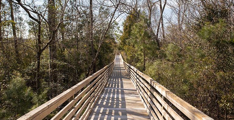 RiverSea Plantation Walking Trails
